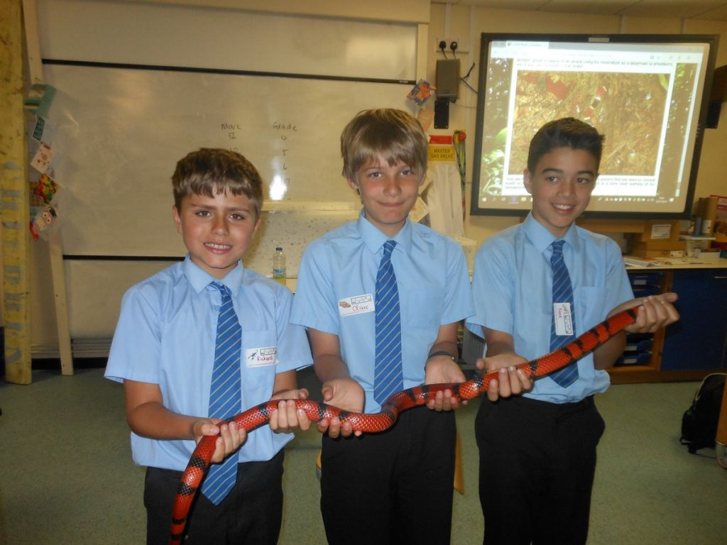 Year 6 Students Hold a Snake!