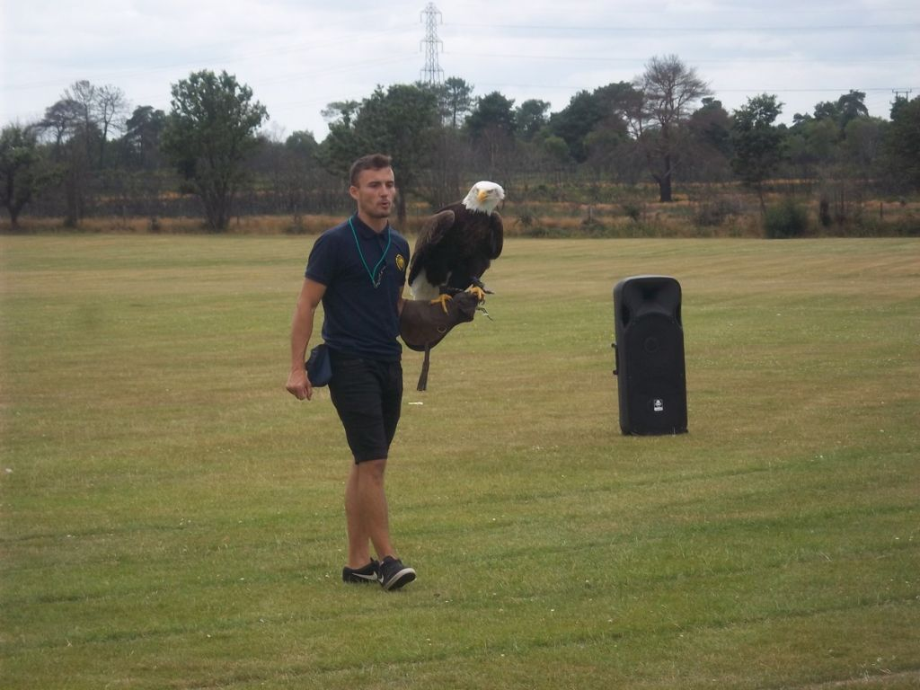 Year 7 Falconry Display